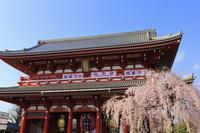 東京都 浅草寺と宝蔵門と桜