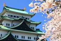 愛知県 名古屋市 名古屋城 桜