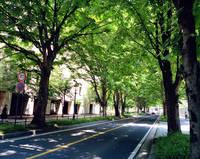 栃木県 栃木県庁前の並木道