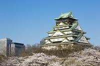 桜咲く大阪城