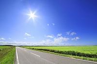 北海道 エサヌカ線と太陽
