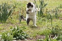 千葉の猫 トカゲ捕り