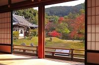 京都府 紅葉の高台寺 方丈から開山堂と臥龍廊と霊屋