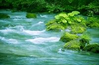 青森県 草木と草葉に覆われた岩と渓流