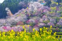 高知県 西川花公園