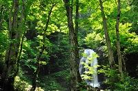 岐阜県 宇津江四十八滝県立自然公園