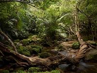 沖縄県 ジャングル
