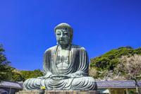 神奈川県 鎌倉大仏とサクラ