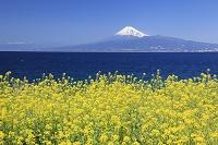 静岡県 富士山とナノハナと駿河湾