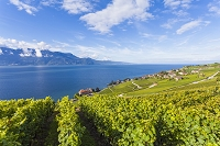 スイス ラヴォー ジュネーブ湖とワイン畑