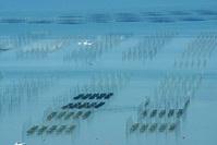 有明海の干潟