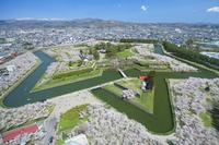 北海道 桜咲く春の五稜郭公園