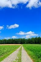 北海道 畑と農道