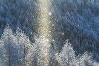 長野県 樹氷林とサンピラー