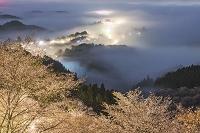 奈良県 桜の吉野山