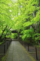 京都府 光明寺 雨上がりの新緑のもみじ参道と薬医門