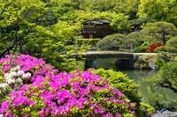 新緑、相楽園の池泉回遊式庭園と船屋形