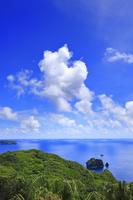 東京都 小笠原諸島 母島 オガサワラビロウの原生林と向島
