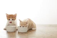 食事する2匹の子猫