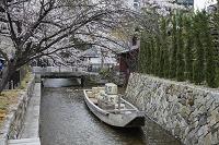 京都府 桜咲く高瀬川一之舟入 高瀬舟