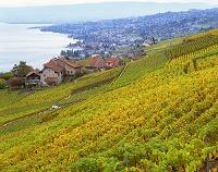 スイス ラボー地区