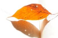 英文の本と落ち葉