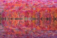 日本 青森県 蔦の森 蔦沼