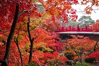 新潟県 弥彦村 弥彦公園の紅葉
