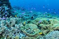パプアニューギニア トゥフィ サンゴ礁のイメージ