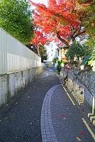 東京都 杉並区 住宅地の路地と紅葉