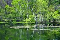 長野県 八千穂高原 駒出池