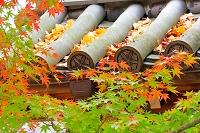 京都 紅葉イメージ