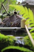 京都府 妙満寺 雪の庭の手水鉢