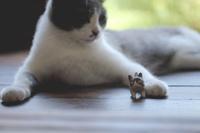 猫と猫の置物