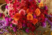赤いバラとオレンジのバラと