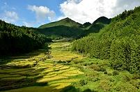愛知県 四谷の千枚田