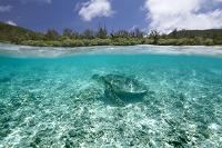 沖縄県 慶良間諸島 座間味島 ウミガメ