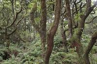 マデイラ 月桂樹の森林