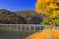 京都府 紅葉の嵐山