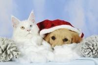 クリスマスの犬と猫