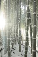 京都 嵐山 竹林の道の雪景色