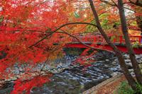静岡県 紅葉の修善寺温泉 桂橋