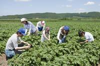 農作業をする家族