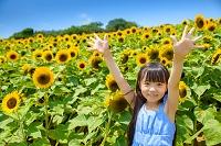 ヒマワリ畑と日本人の女の子