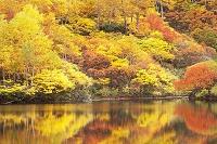 北海道 高原温泉沼めぐり