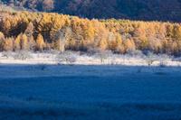 栃木県 小田代ヶ原のカラマツ林と霜
