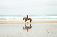 海辺を歩く馬
