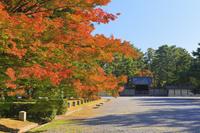 京都市 京都御苑の紅葉