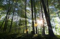 光が差し込む林