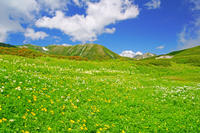 岐阜県 弓折岳の花畑と双六岳左と鷲羽岳右奥の山